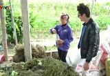 Nông nghiệp sạch: Rau hữu cơ Thanh Xuân sản phẩm nông nghiệp TP Hà Nội