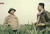 Nông nghiệp sạch: Dứa Đồng Giao sản phẩm nông nghiệp tỉnh Ninh Bình