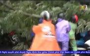 Người dân lao vào cứu 2 phụ nữ bị cây đè do bão