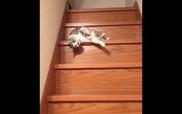 Chú mèo lười biếng nhất thế giới
