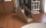 Một ngày tăng động của mèo Maru