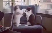 """Đây gọi là """"làm trò mèo"""""""