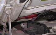 Giải cứu mèo con trốn dưới nắp ca-pô