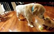 Cún và người bạn mới về nhà