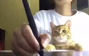 Làm việc mà có mèo bên cạnh thì thôi nhé...