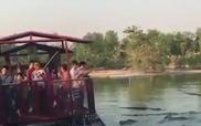 Tranh cãi việc du khách bị đàn cá sấu đói bủa vây