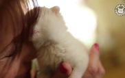13 chú mèo con dễ thương nhất quả đất