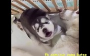 Có ai muốt bắt cóc một em cún như này về nuôi không?