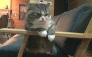 Ngày đầu tuần của mèo lười Maru và Hana