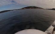 Khoảnh khắc cá mập 5 mét lượn quanh người chèo thuyền