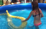 Gái xinh mặc bikini tung tăng bơi lội bên trăn bạch tạng khổng lồ