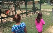 Đang vui vẻ đi sở thú thì bị con khỉ cáu bẩn ném phân trúng mặt