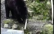 Chết cười với clip chú gấu múa kiếm cực siêu