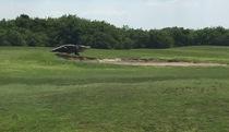 """Cá sấu """"đi dạo"""" trên sân golf"""
