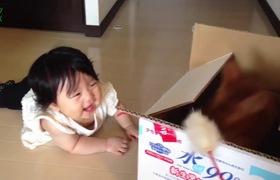 Bé cười thích thú bên cạnh mèo lười
