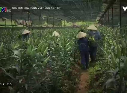 Chuyện nhà nông: Phát huy hiệu quả chuỗi liên kết trong sản xuất nông nghiệp