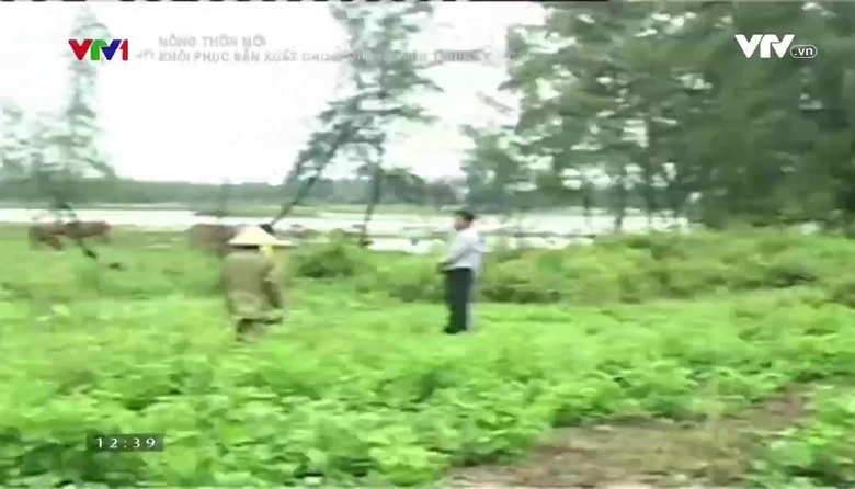 Nông thôn mới: Khôi phục sản xuất tại 4 tỉnh miền Trung