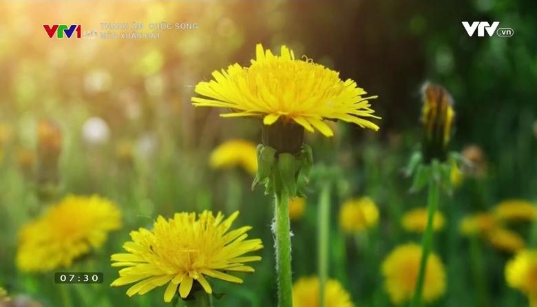 Thanh âm cuộc sống: Mùa xuân hát