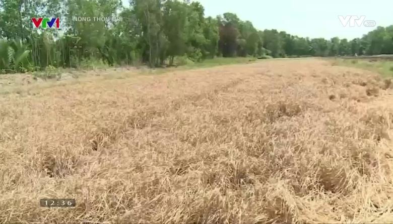 Nông thôn mới: Nông nghiệp 2016 vượt khó