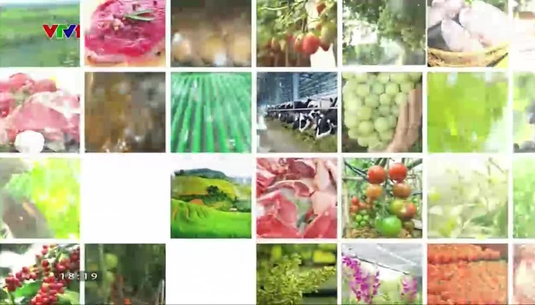 Nông nghiệp sạch: Xà lách tím sản phẩm nông nghiệp tỉnh Lâm Đồng