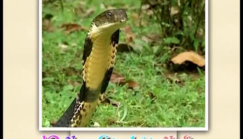 Mười vạn câu hỏi vì sao: Những động vật nguy hiểm nhất Ấn Độ - Phần 1