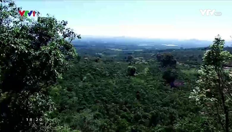 Nông nghiệp sạch: Mắc Ca Đà Lạt sản phẩm nông nghiệp tỉnh Lâm Đồng