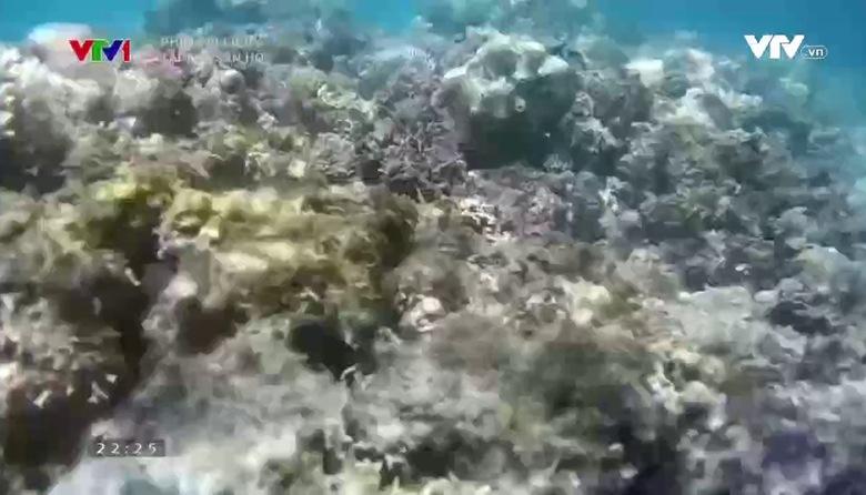 Phim tài liệu: Tái tạo san hô