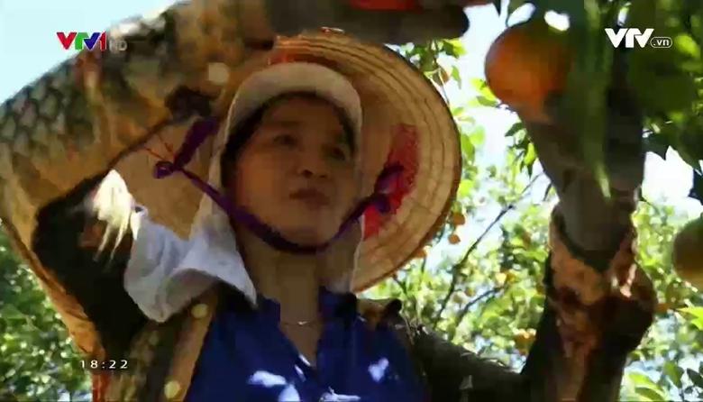 Nông nghiệp sạch: Cam Đường canh sản phẩm nông nghiệp tỉnh Lâm Đồng