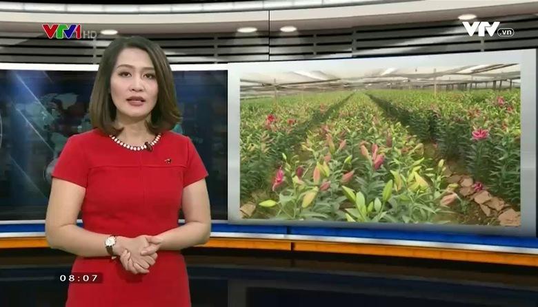 Công nghệ - Đời sống: Công nghệ hoa Tết thích ứng với biến đổi khí hậu