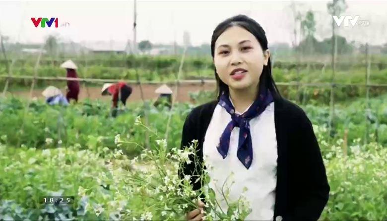 Nông nghiệp sạch: Rau hữu cơ sản phẩm nông nghiệp tỉnh Hà Nam