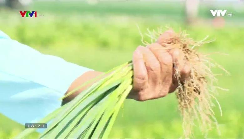 Nông nghiệp sạch: Hành lá sản phẩm nông nghiệp tỉnh Nghệ An
